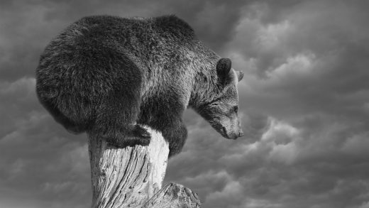 Bear Market Beware, the A/D is at an all time high